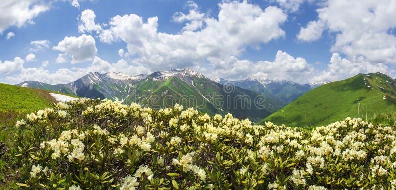 A paisagem da montanha com rododendros floresce no dia de verão ensolarado em Svaneti, Geórgia imagens de stock royalty free