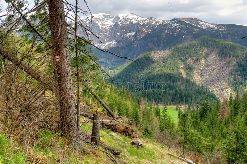 Paisagem da montanha da mola fotos de stock royalty free