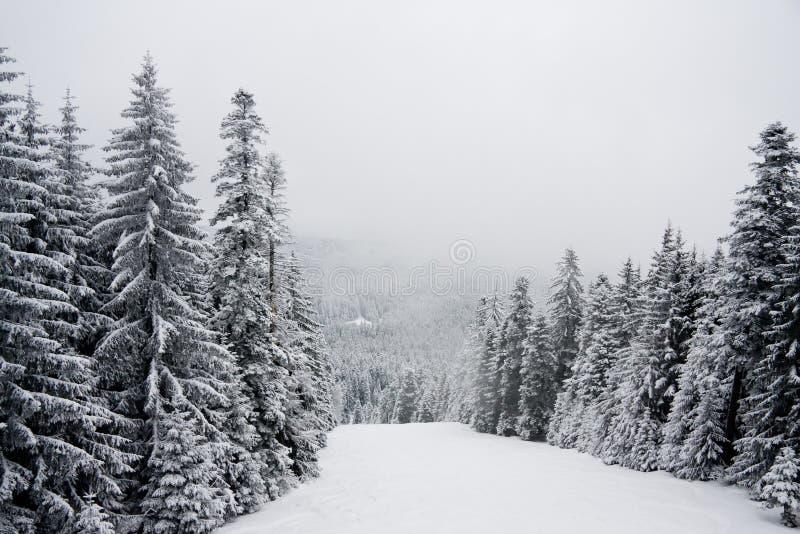 Paisagem da montanha da neve do inverno em Bulgária imagens de stock royalty free