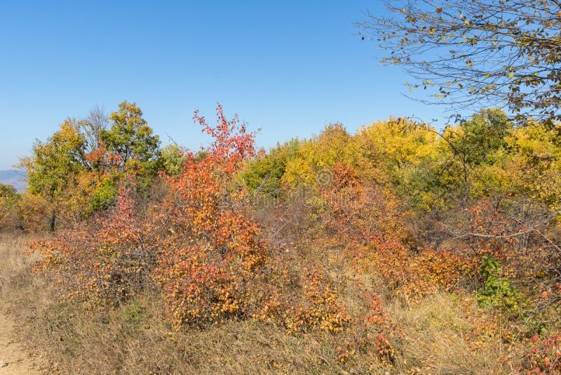 Paisagem da montanha de Cherna Gora Monte Negro, região do outono de Pernik, Bulgária imagens de stock