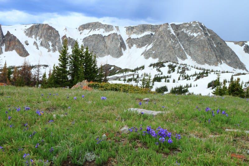 Paisagem da montanha de Wyoming imagens de stock