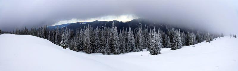 Paisagem da montanha do inverno com pinheiros cobertos de neve e o baixo c imagens de stock royalty free