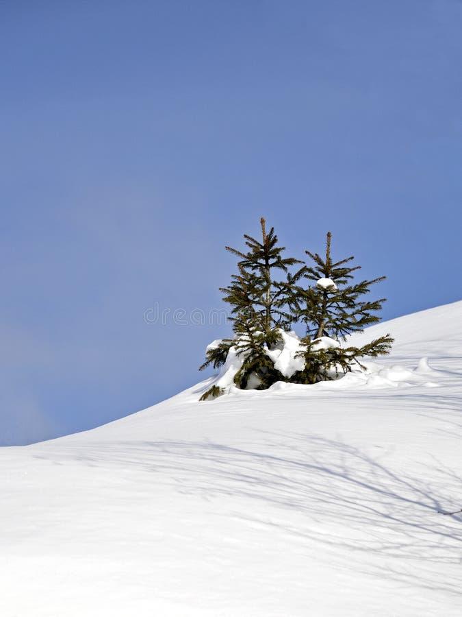 Paisagem da montanha do inverno com pouca árvore de Natal fotografia de stock royalty free