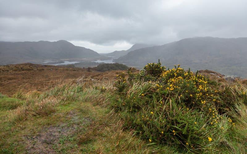 Paisagem da montanha do outono após a chuva imagens de stock