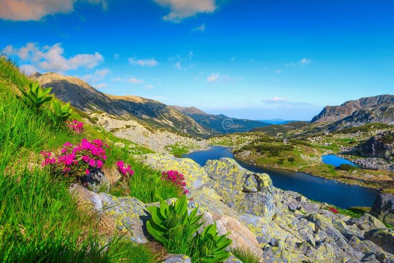 Paisagem da montanha do verão com flores e os lagos alpinos, a Transilvânia, Romênia fotos de stock