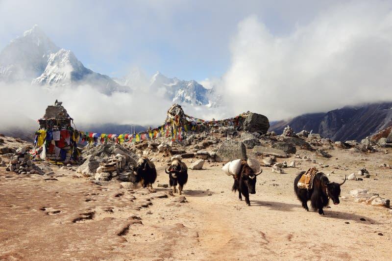 Paisagem da montanha dos Himalayas Iaques na passagem Nepal do leste imagens de stock