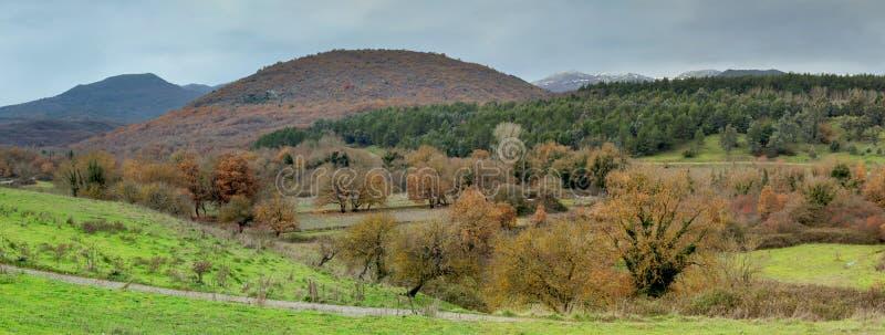 Paisagem da montanha Floresta outonal imagens de stock royalty free