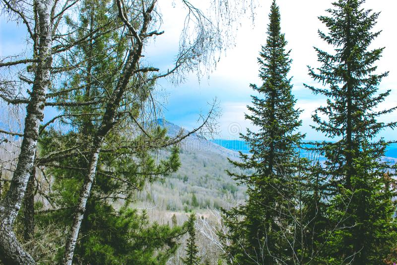 Paisagem da montanha da mola em Altay Fotografia do fundo da paisagem natural do verão Floresta da montanha na paisagem das nuven foto de stock royalty free