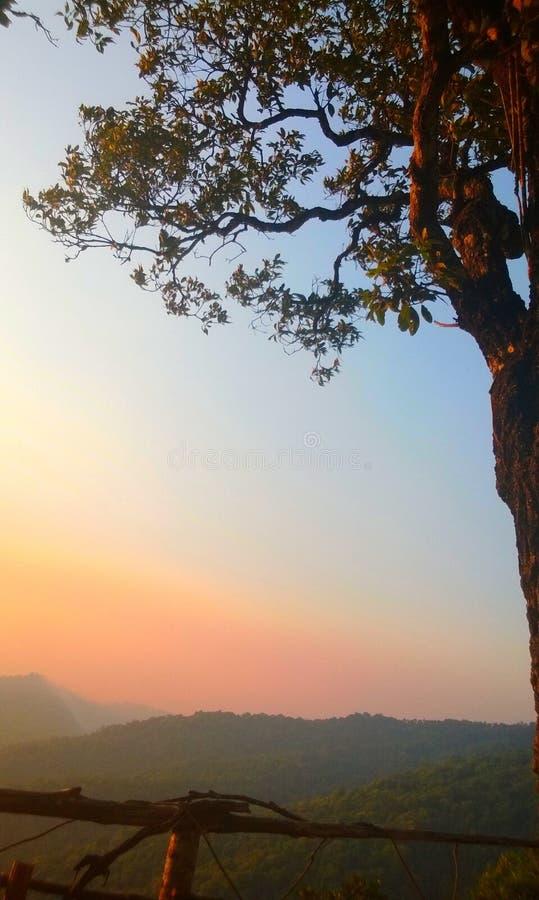 Paisagem da montanha s do por do sol do céu do ouro da árvore imagem de stock royalty free