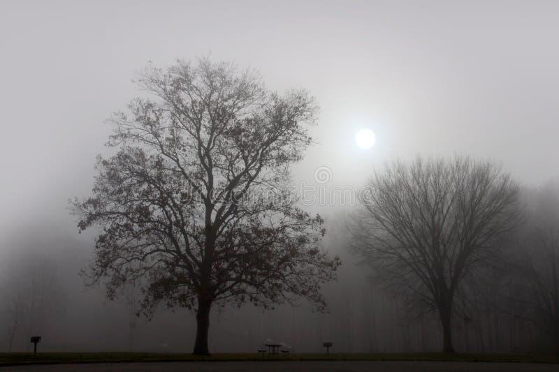 Paisagem da névoa fotos de stock royalty free