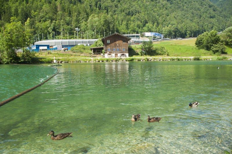 Paisagem da natureza do cenário verde do lago imagem de stock royalty free