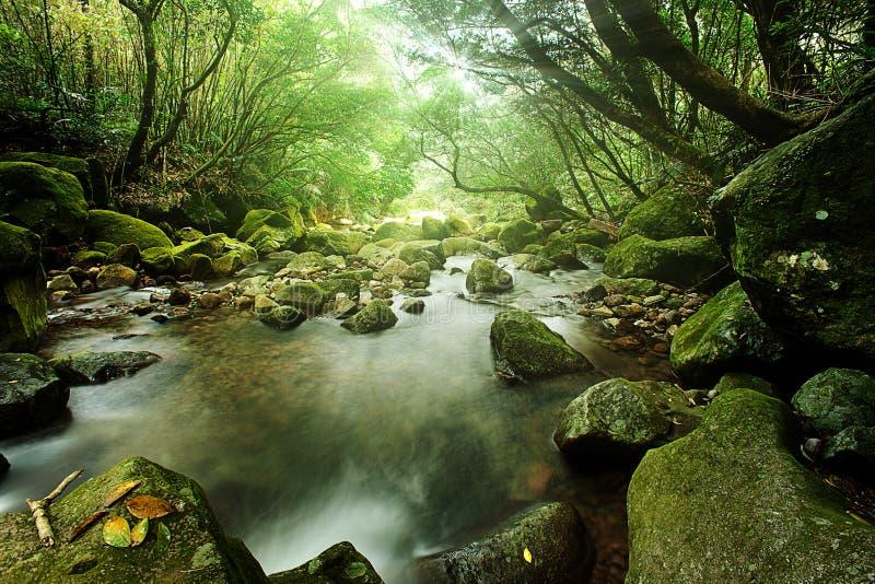 Paisagem da natureza do rio com o córrego na natureza da floresta úmida imagem de stock