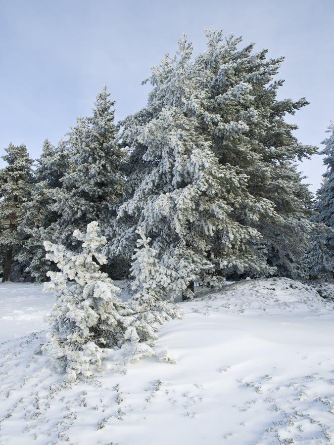 Paisagem da neve imagem de stock