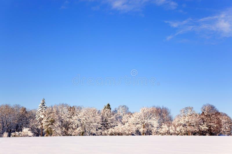 Paisagem da neve imagem de stock royalty free
