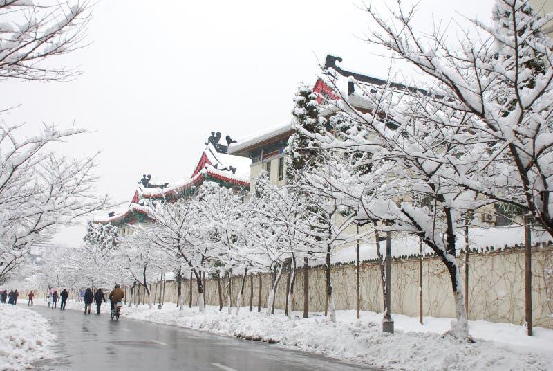 Paisagem da neve foto de stock