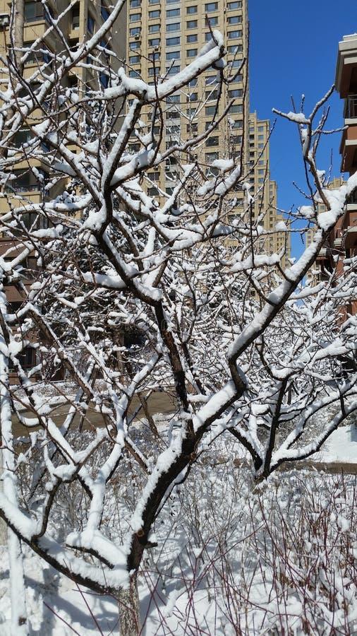 Paisagem da neve-covred foto de stock royalty free