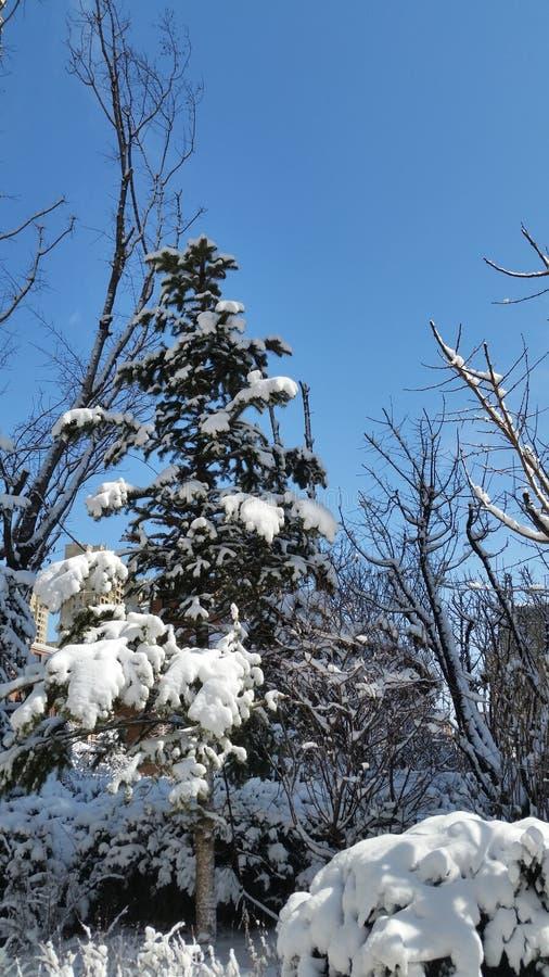 Paisagem da neve-covred imagens de stock