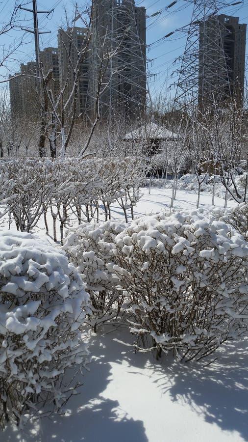 Paisagem da neve-covred imagem de stock royalty free