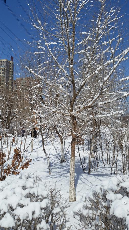 Paisagem da neve-covred foto de stock