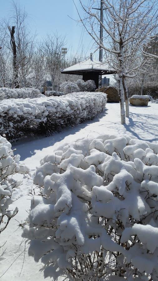 Paisagem da neve-covred imagens de stock royalty free