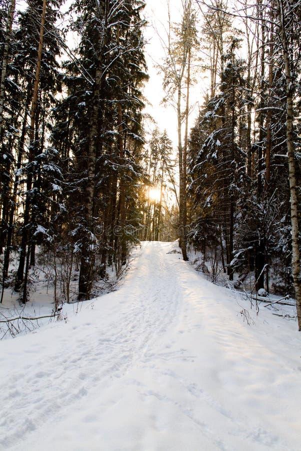 Paisagem da neve do inverno fotografia de stock