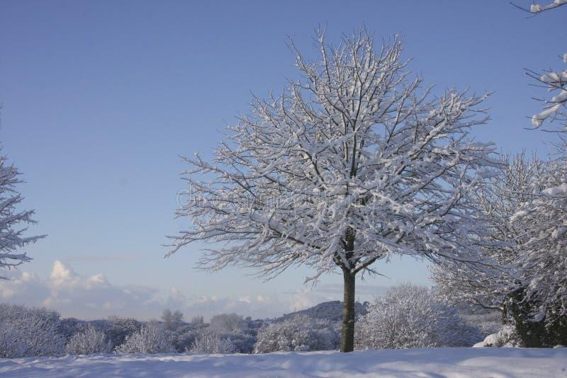 Paisagem da neve do inverno, Cardiff, Reino Unido imagem de stock