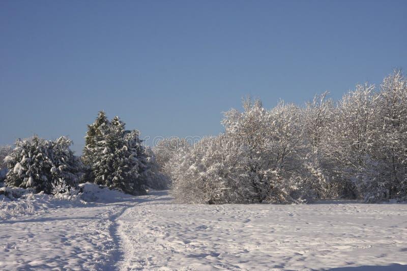 Paisagem da neve do inverno, Cardiff, Reino Unido foto de stock royalty free