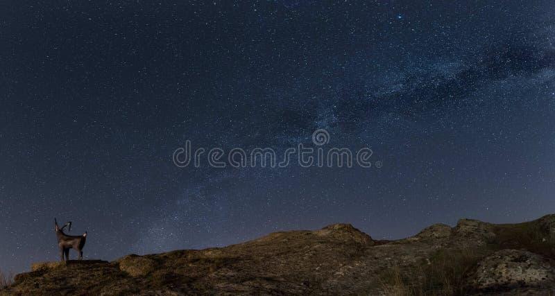 A paisagem da noite com o ovis do mouflon da Via Látea e dos carneiros perto da cidade pequena Aytos durante a mola Stars sobre B imagens de stock