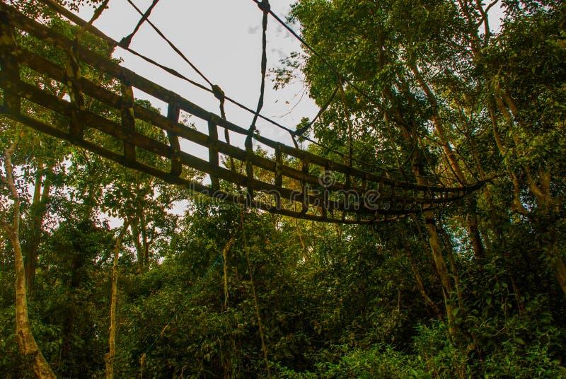 Paisagem da noite das florestas e da malha Rio de Kinabatangan, floresta úmida da ilha de Bornéu, Sabah Malaysia fotos de stock