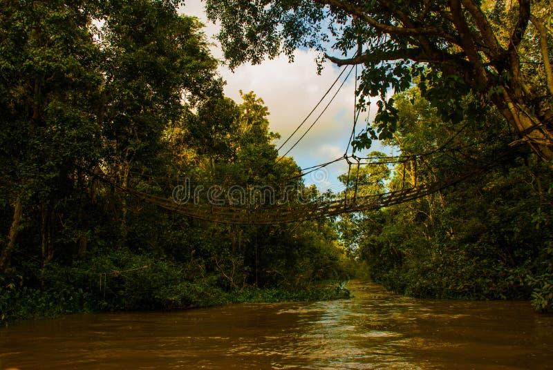 Paisagem da noite das florestas e da malha Rio de Kinabatangan, floresta úmida da ilha de Bornéu, Sabah Malaysia foto de stock