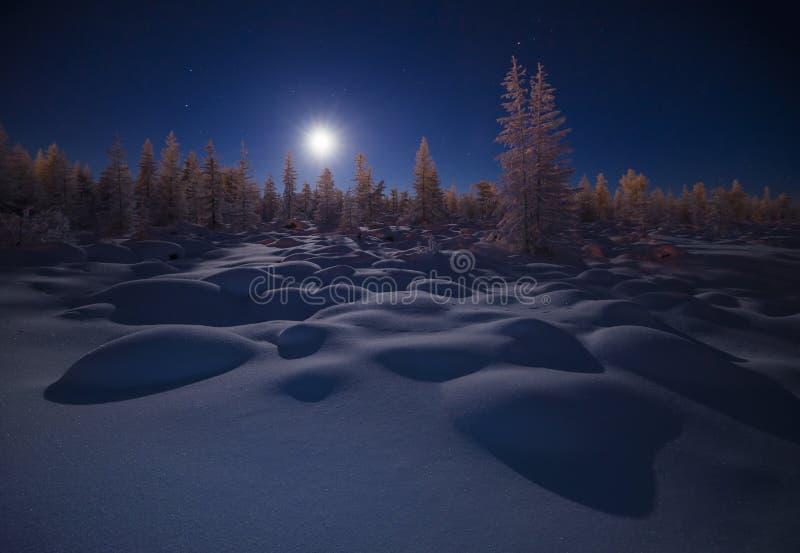 Paisagem da noite do inverno com floresta, lua e penhascos sob a neve fotos de stock royalty free