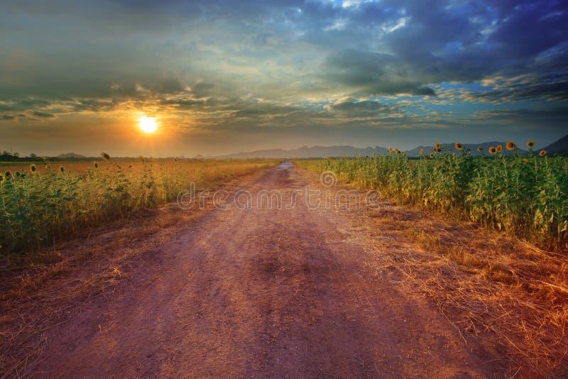 Paisagem da perspectiva rural da estrada ao campo de exploração agrícola do girassol com imagens de stock