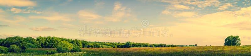 Paisagem da pradaria com árvores verdes imagem de stock royalty free