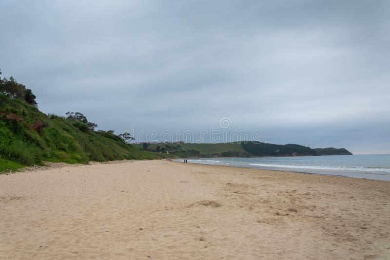 Paisagem da praia abandonada com vegetação, uma tarde nebulosa do verão fotos de stock