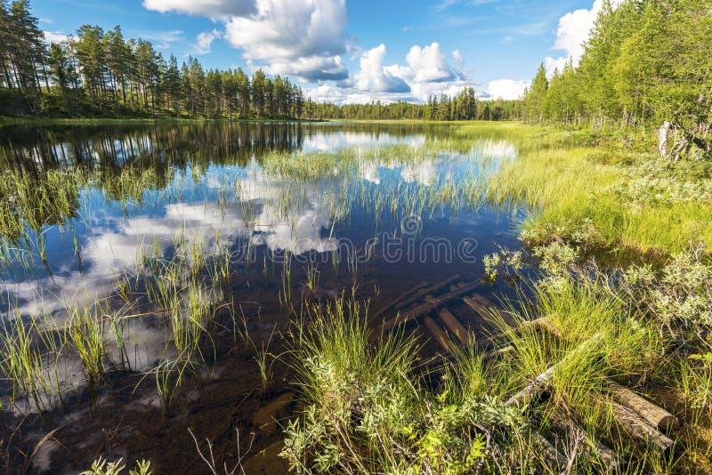 Paisagem da região pantanosa ao longo do rio de Soralven no Condado de Dalarna da Suécia fotografia de stock royalty free
