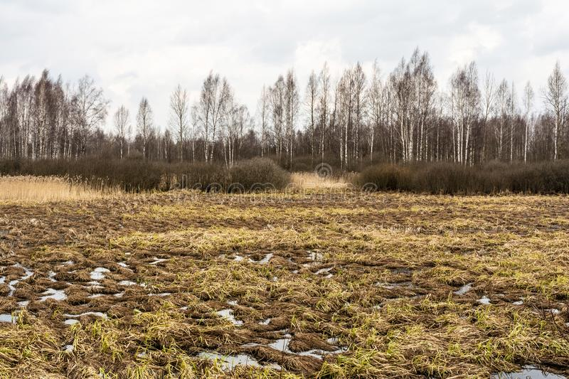 Paisagem da região pantanosa com uma árvore desencapada da folha mostrada em silhueta contra um céu azul nebuloso Gramas inoperan fotografia de stock