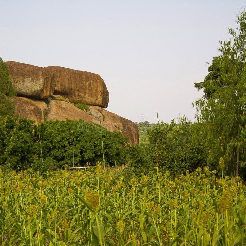Paisagem da rocha dentro do campo da plantação imagem de stock