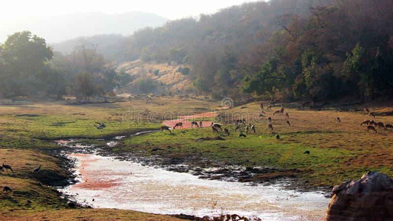Paisagem da terra dos tigres, parque nacional de Ranthambore, Índia imagens de stock royalty free