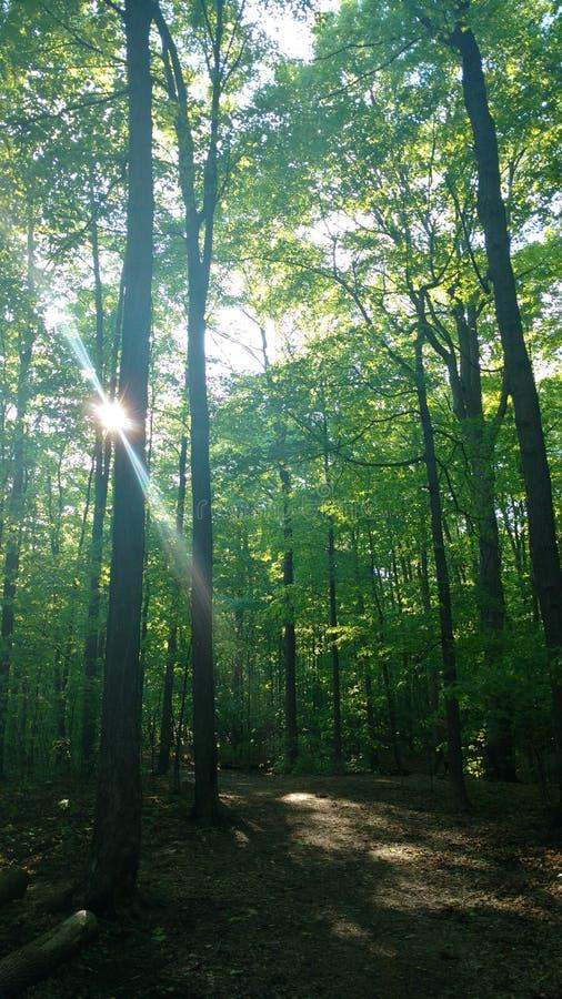 Paisagem das árvores da natureza fotografia de stock