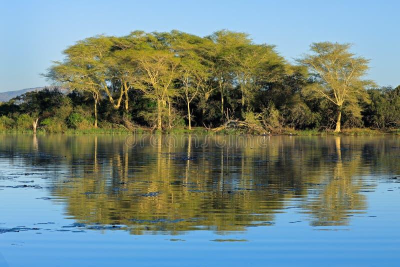 Paisagem das árvores e do lago de febre imagem de stock royalty free