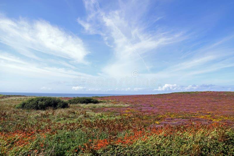Paisagem das flores, do céu e do Oceano Atlântico fotos de stock royalty free