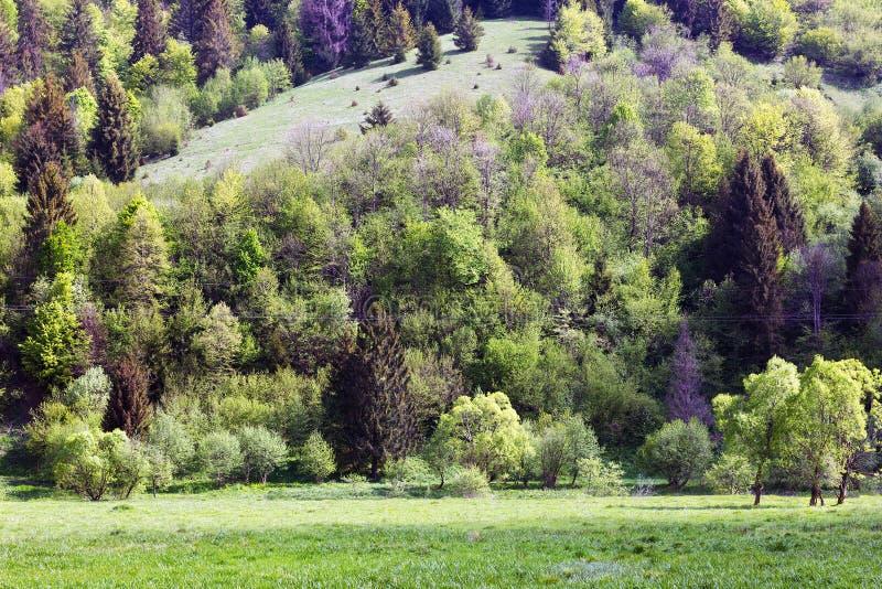 Paisagem das montanhas com abeto fotografia de stock royalty free