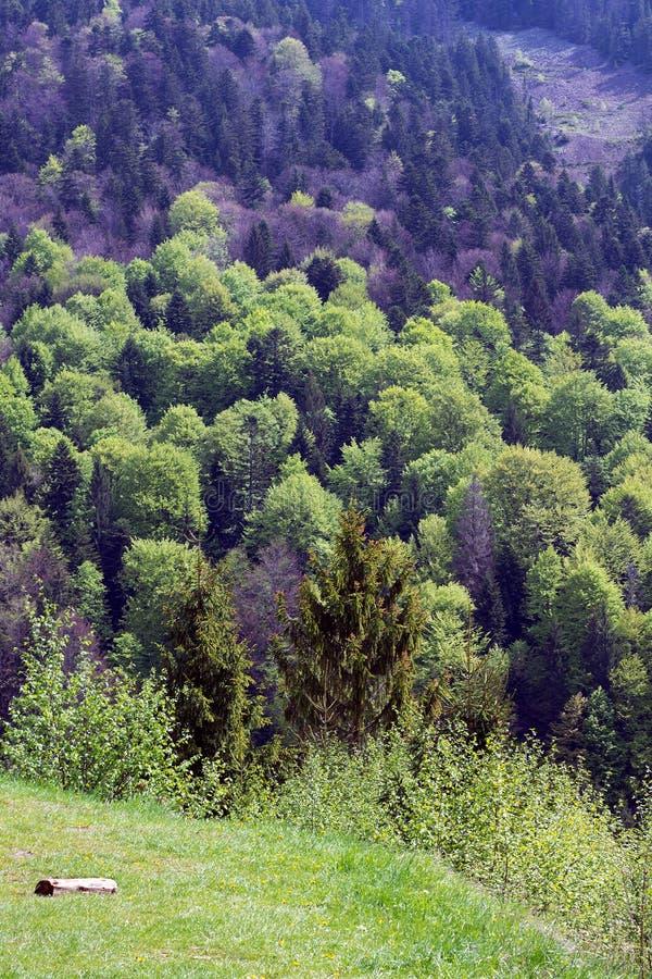 Paisagem das montanhas com abeto e o vale verde com log fotografia de stock