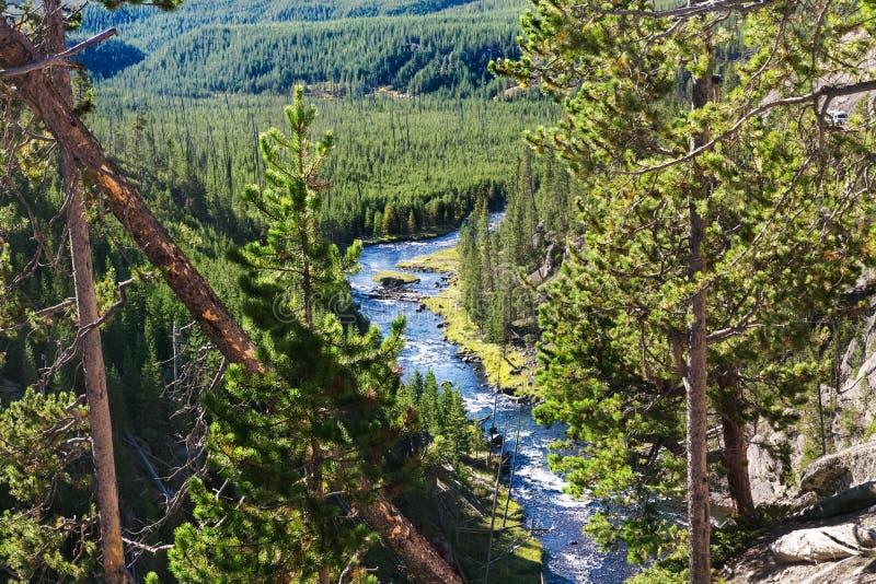 Paisagem das montanhas da floresta Parque nacional de Yellowstone foto de stock royalty free