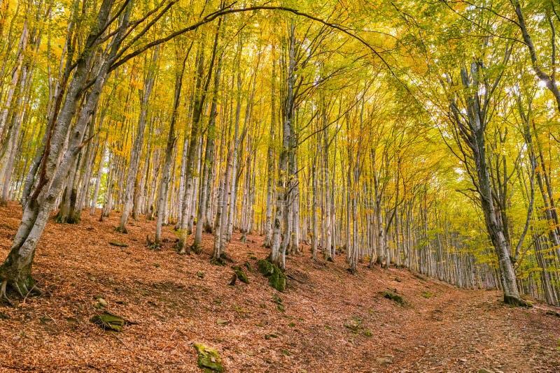 paisagem das ?rvores de floresta do outono foto de stock royalty free