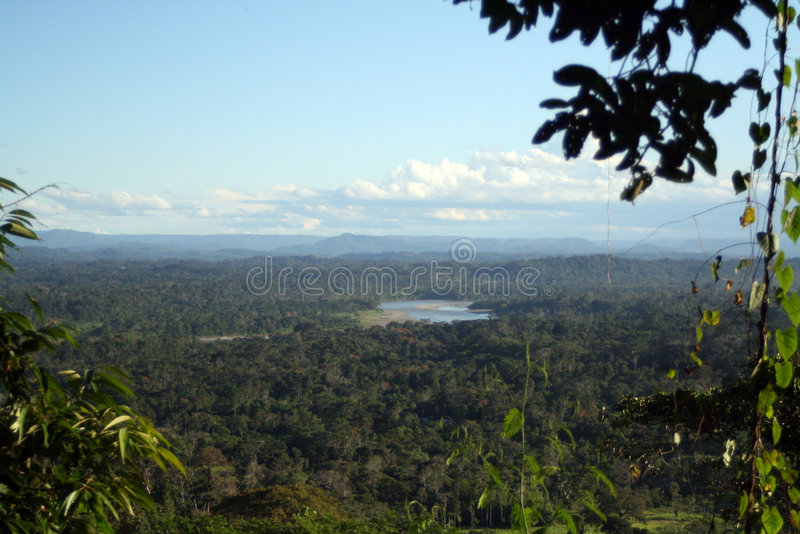 Paisagem de Amazónia fotos de stock royalty free