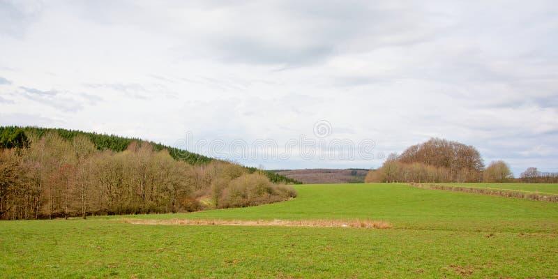 Paisagem de Ardennes com maedows e camadas verdes de decíduo desencapado e pinheiros sob um céu nebuloso fotografia de stock