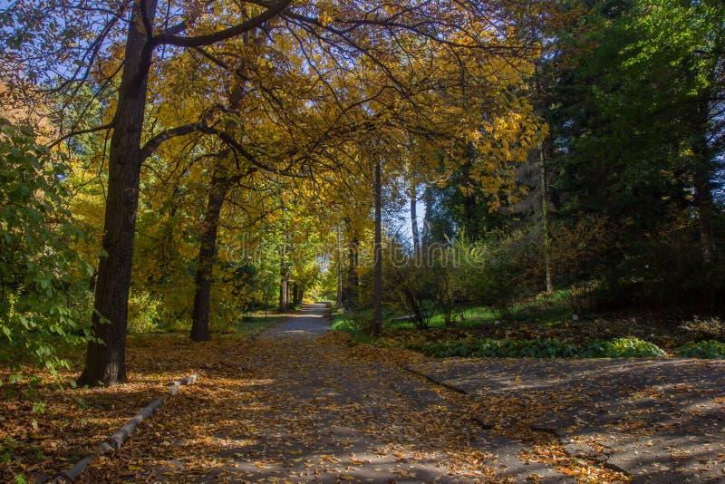 Paisagem de Autumn October árvores desiduous coloridas - opinião ensolarada do outono Jardim botânico da universidade acadêmico d imagem de stock