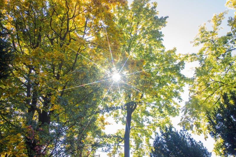 Paisagem de Autumn October árvores desiduous coloridas - opinião ensolarada do outono Jardim botânico da universidade acadêmico d fotografia de stock
