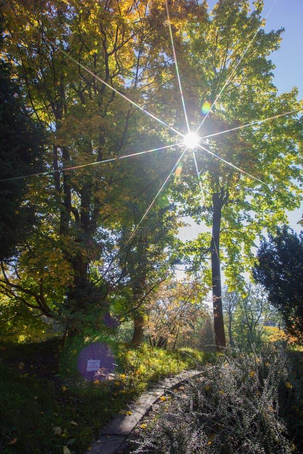 Paisagem de Autumn October árvores desiduous coloridas - opinião ensolarada do outono Jardim botânico da universidade acadêmico d foto de stock